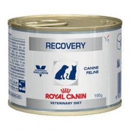 royal canin recovery 6 lattine da 195gr -