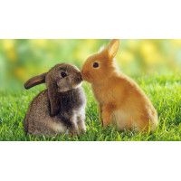 Products for Rabbits.