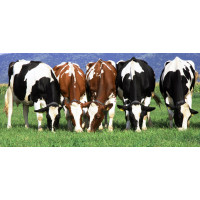 SHOP FOR CATTLE